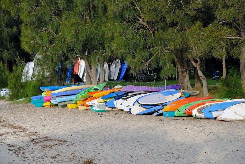 Красочные арендные каяки моря, розовый залив, Сидней, Австралия стоковое изображение rf