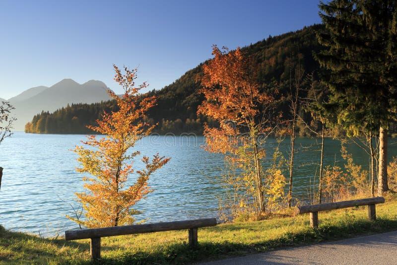 Красочные деревья на озере стоковые фотографии rf