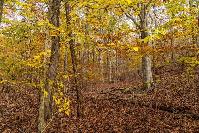 Красочные деревья осени стоковая фотография rf