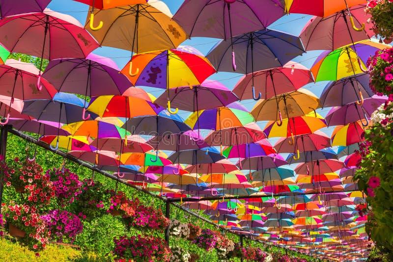 Красочные зонтики в саде чуда Дубай стоковое фото