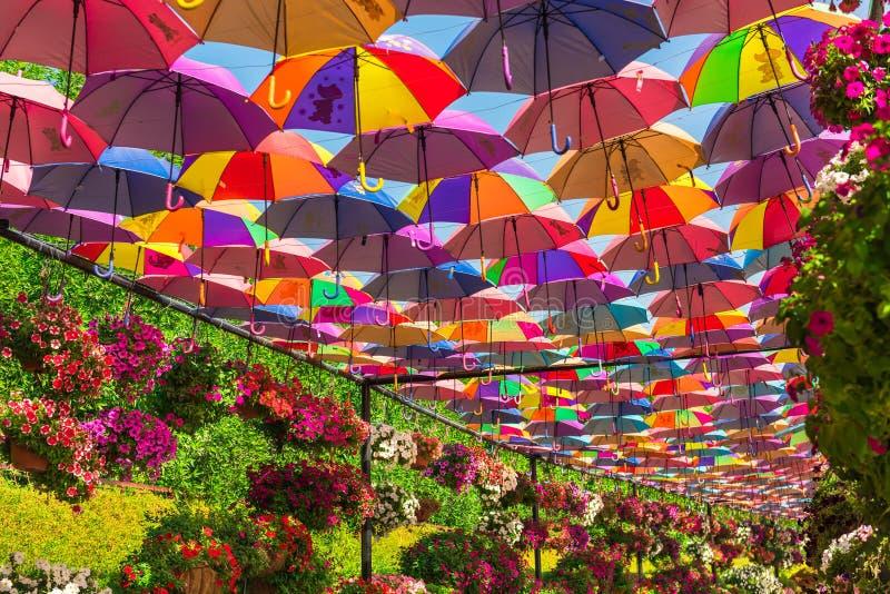 Красочные зонтики в саде чуда Дубай стоковое изображение