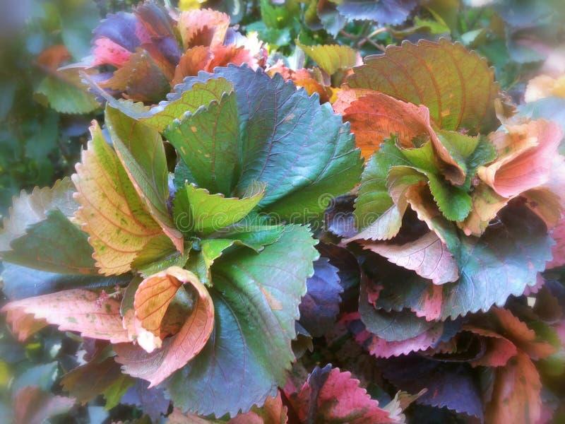 Красочные листья и дерево стоковое изображение rf