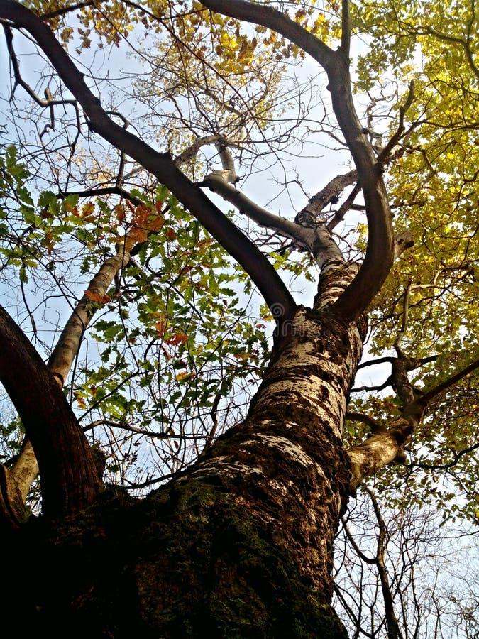 Красочные листья на деревьях в солнечности осени стоковое изображение
