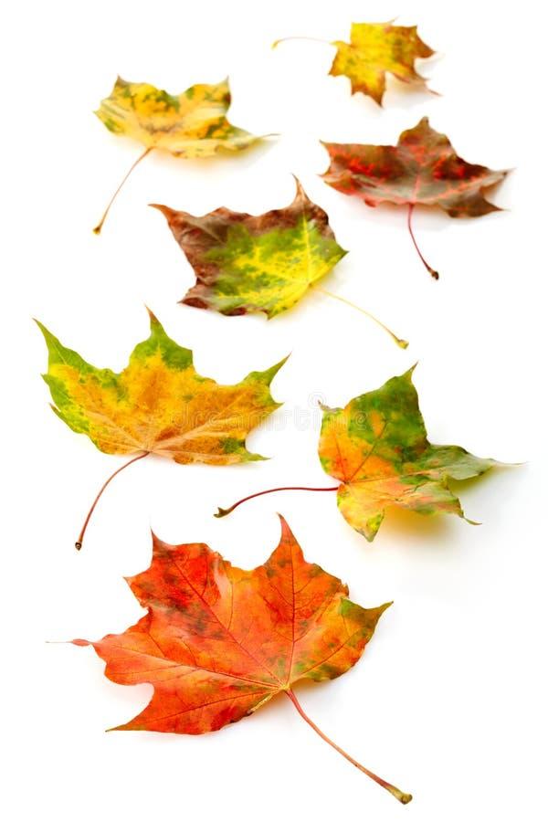 Download Цветастые листья осени стоковое изображение. изображение насчитывающей красивейшее - 33730491