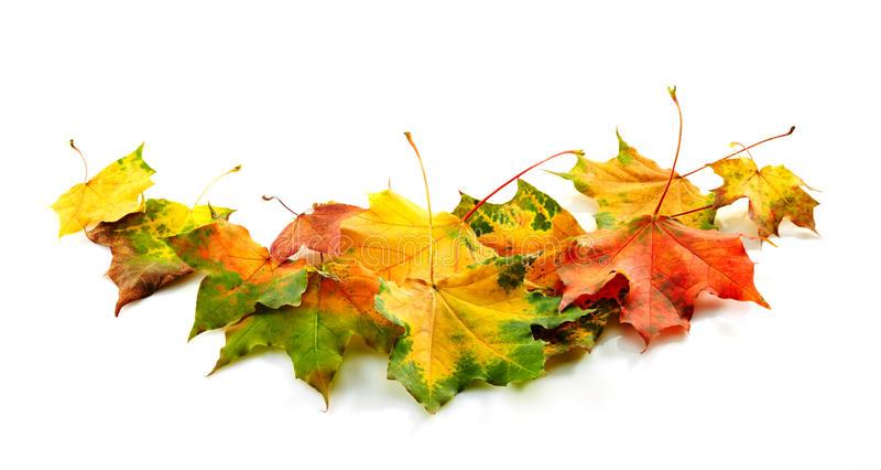 Download Цветастые листья осени стоковое изображение. изображение насчитывающей померанцово - 33730515