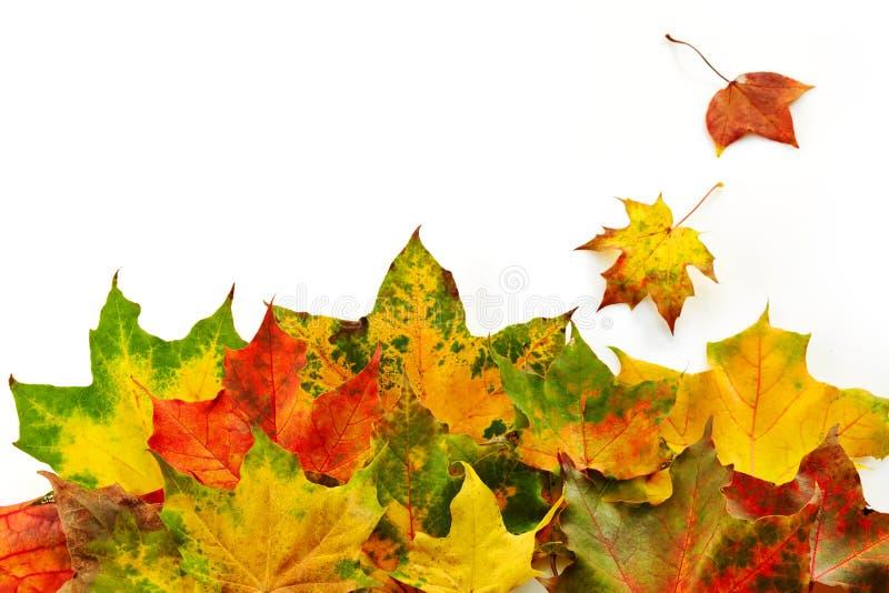 Download Цветастые листья осени стоковое фото. изображение насчитывающей естественно - 33730520