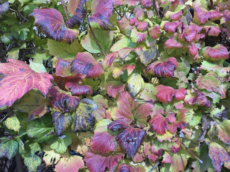 Download красочные листья падения изменяя цвет Стоковое Фото - изображение насчитывающей brampton, коллаж: 81806892