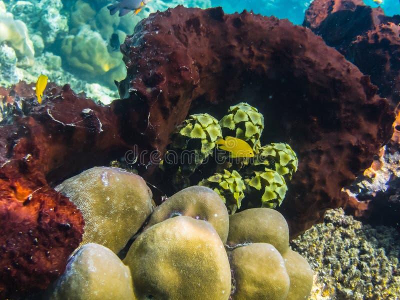 красочные коралл и заводы стоковая фотография rf