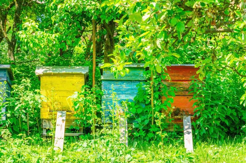 Красочные крапивницы в традиционной деревне стоковое изображение rf