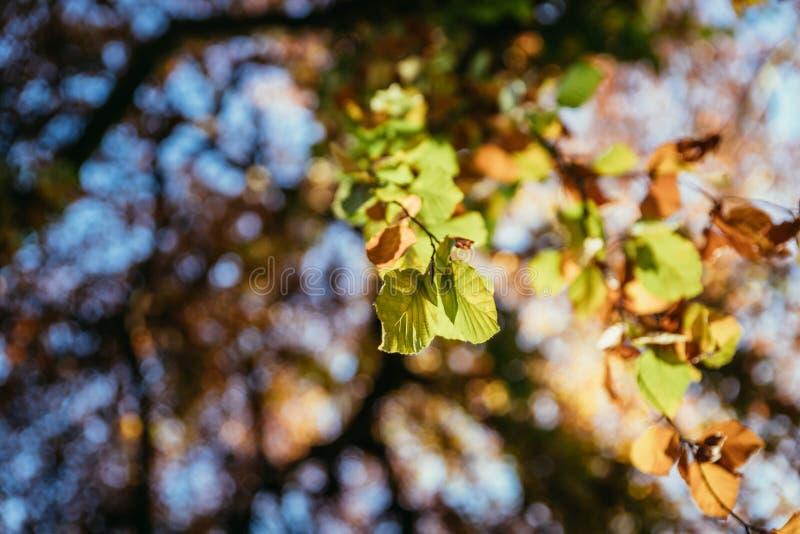 Красочные листья в парке, осени, космосе экземпляра стоковое фото rf