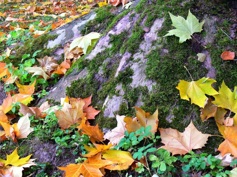 Красочные листья осени на ноге мшистого дерева стоковое фото