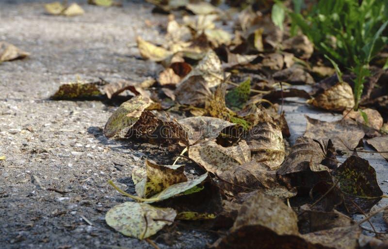 Красочные листья осени на холодном открытом море с отражениями солнца, золоте струятся Концепция осени приходила стоковые фотографии rf
