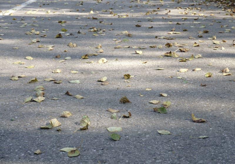 Красочные листья осени на холодном открытом море с отражениями солнца, золоте струятся Концепция осени приходила иллюстрация штока