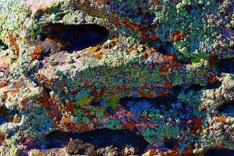 Красочные лишайники на предпосылке утеса стоковое изображение