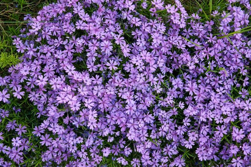 красочные малые цветки сада стоковые фотографии rf