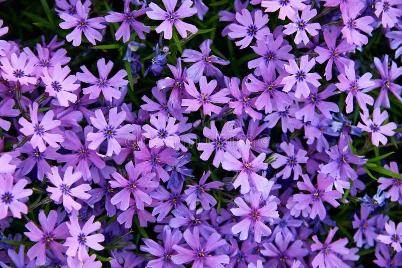 красочные малые цветки сада стоковые изображения rf