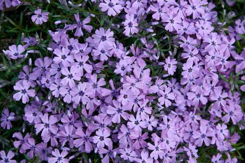 красочные малые цветки сада стоковое фото rf