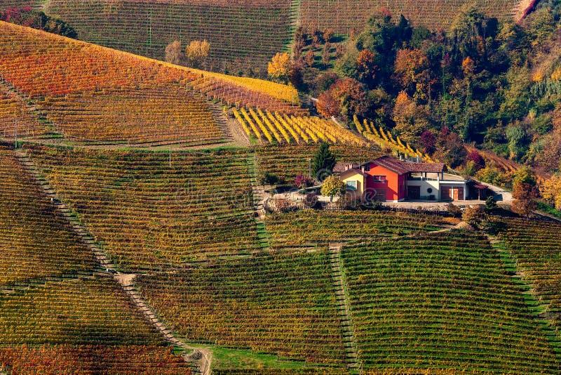 Красочные осенние холмы и виноградники в Италии стоковое изображение rf