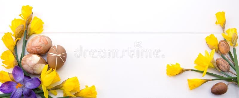 Красочные пасхальные яйца и желтые daffodils стоковое фото