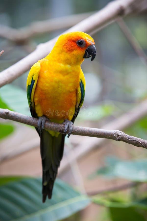 Красочные птицы стоковое фото rf