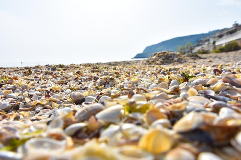 Красочные раковины моря как предпосылка стоковое фото