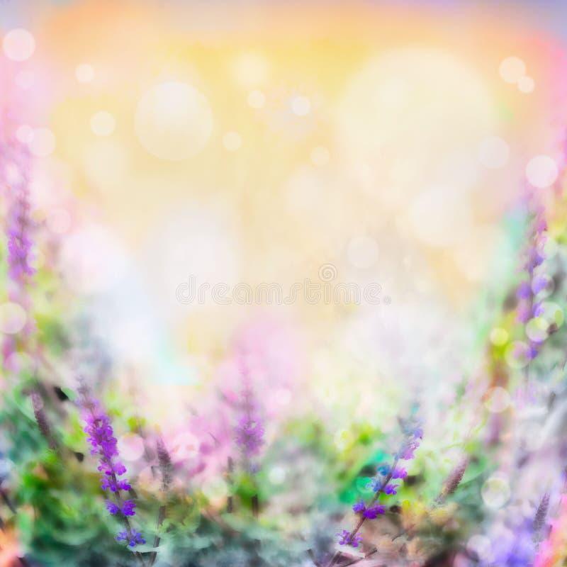 Красочные розовые фиолетовые цветки запачкали предпосылку с светом и bokeh стоковая фотография rf