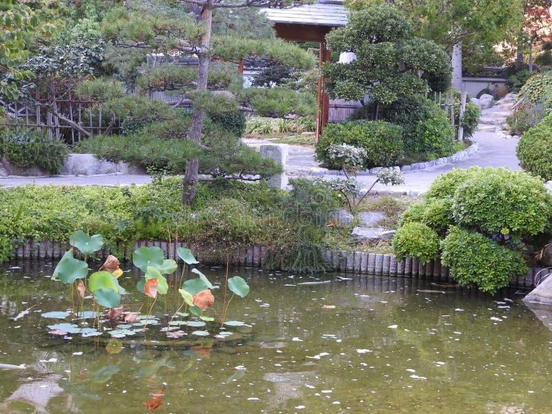 Красочные рыбы в пруде японского сада в Монте-Карло стоковое фото