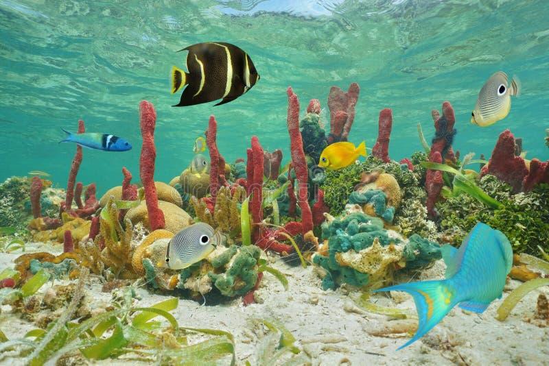 Красочные тропические рыбы и морская флора и фауна подводные стоковая фотография rf