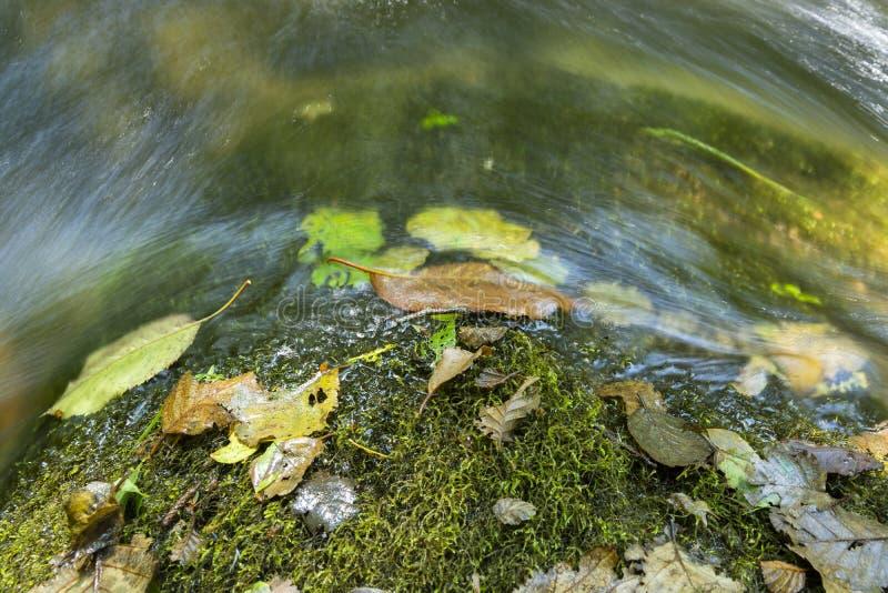 Красочные упаденные листья поверх утеса с мхом и проточной водой стоковое фото