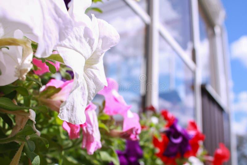Красочные цветки в задворк на отражении летнего дня стоковая фотография