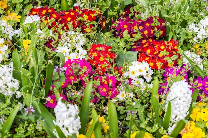 Красочные цветки в парке ландшафта фокуса поля дня облаков сини небо выставки заводов движения должного польностью зеленого мален стоковые изображения