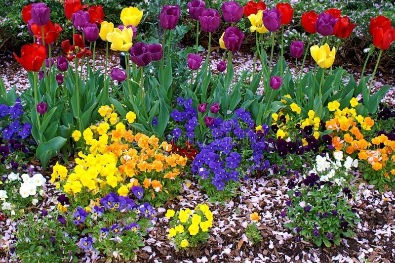 Красочные цветки в саде границы стоковые фотографии rf