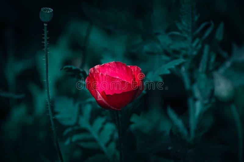красочные цветки глубокие поля стоковое фото rf