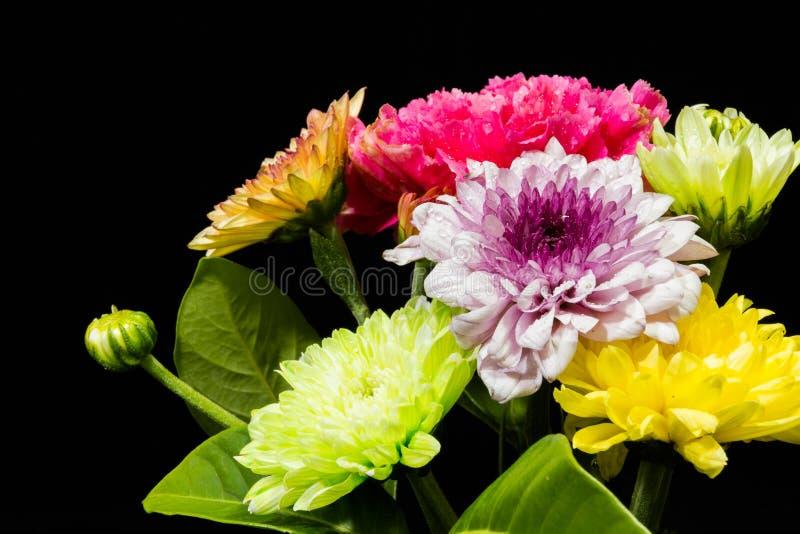 Красочные цветки на черной предпосылке стоковое фото rf