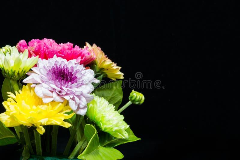 Красочные цветки на черной предпосылке стоковые фотографии rf