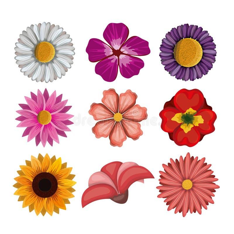 Красочные цветки установленные в белую предпосылку бесплатная иллюстрация