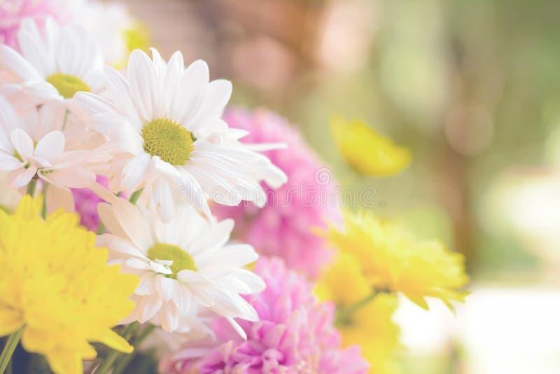 Красочные цветки хризантемы - дизайн границы стоковая фотография