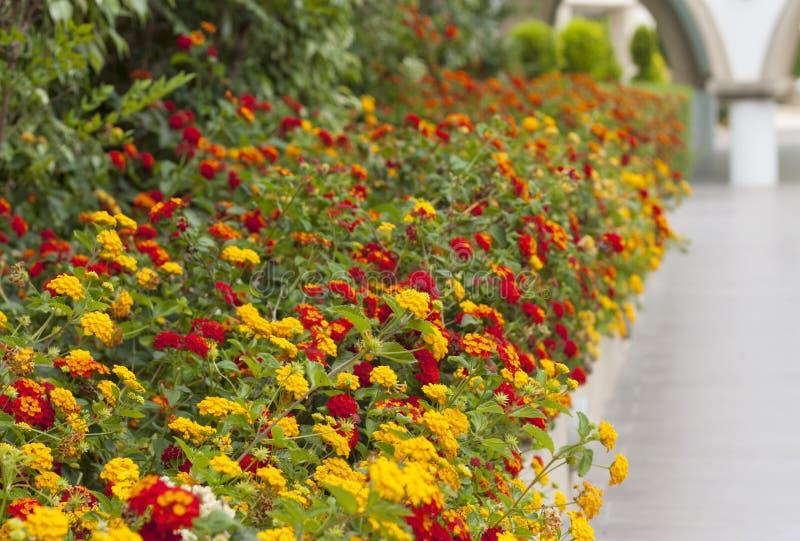 Красочные цветковые растения границы цветка на фото сада стоковое фото