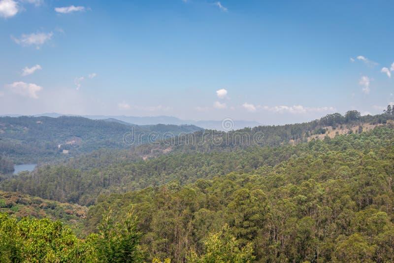 Красочный взгляд леса с небом стоковая фотография rf