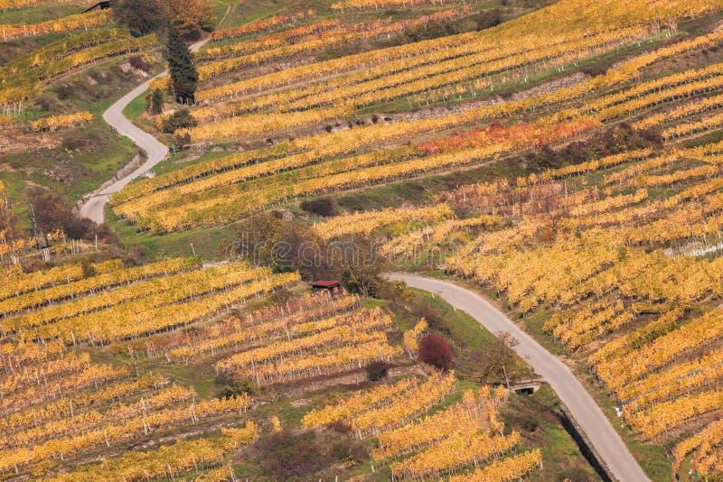 Красочный виноградник в долине Wachau в Австрии стоковые изображения