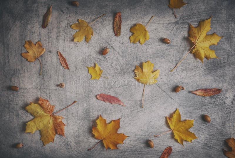 Красочный высушите листья и жолудь разбросанные на Scratchy предпосылку стоковые фотографии rf
