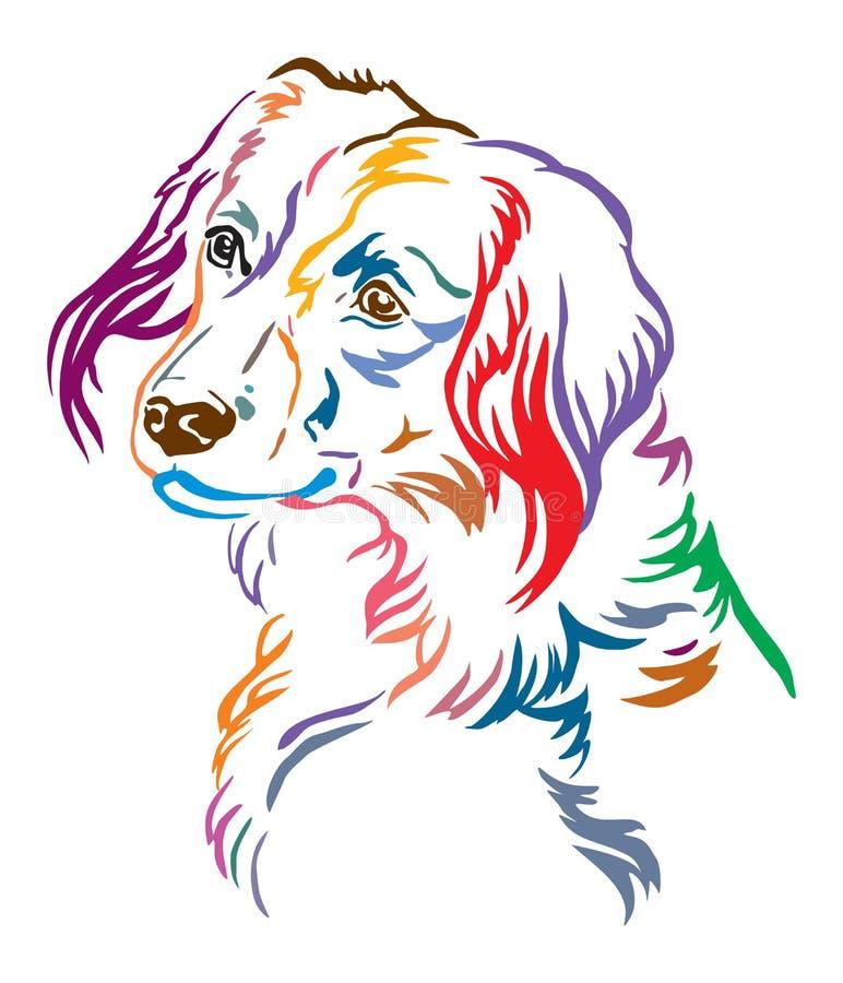 Красочный декоративный портрет иллюстрации вектора собаки Nederlandse Kooikerhondje иллюстрация штока