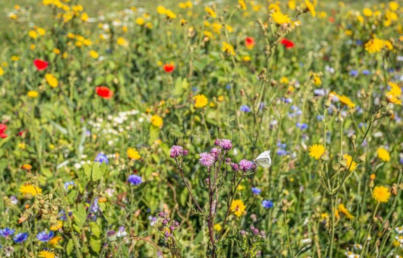 Красочный допустимый предел поля с разнообразными засеянными цветками вдоль поля стоковое фото rf