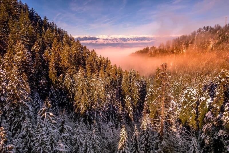 Красочный заход солнца в лесе гор снега стоковое изображение rf