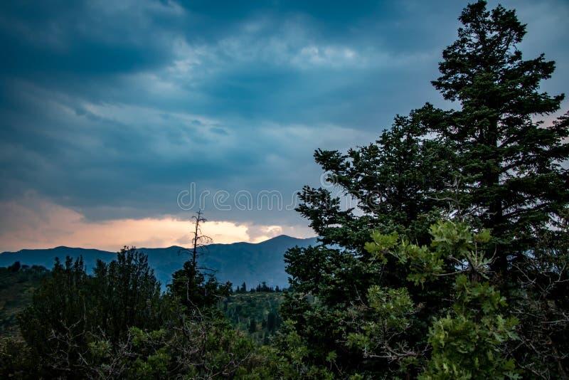 Красочный заход солнца в облаках за соснами стоковое фото rf