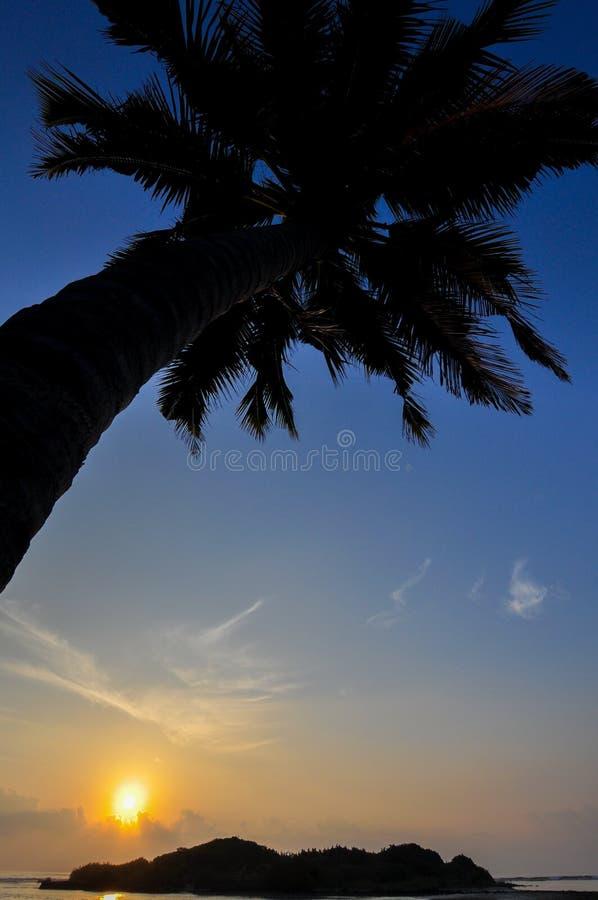 Красочный заход солнца на тропическом пляже с силуэтами пальм стоковые фото