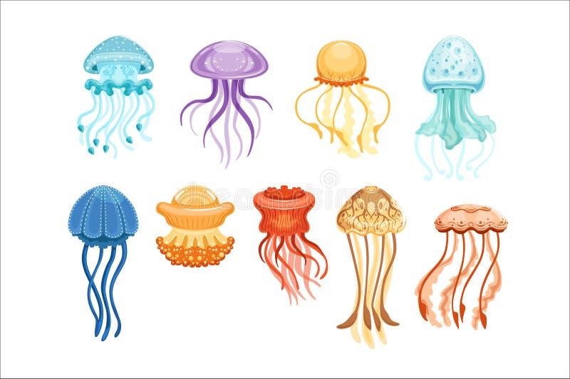 Красочный комплект медуз, плавая морские иллюстрации вектора акварели тварей иллюстрация штока