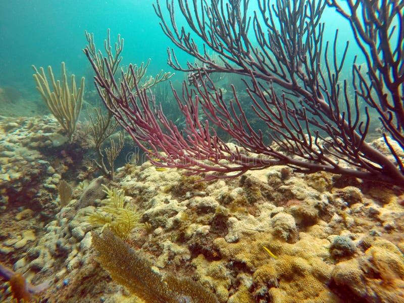Красочный коралл с крошечными рыбами стоковое фото