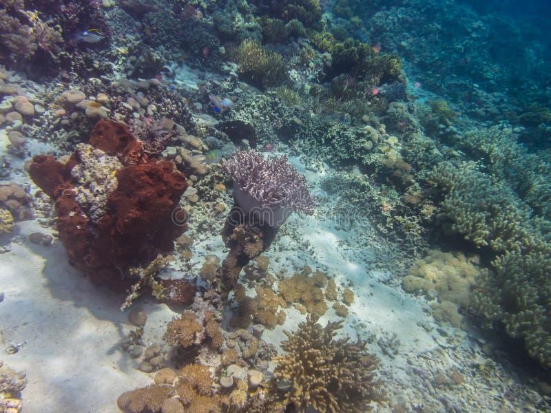 Красочный коралл в море стоковое изображение