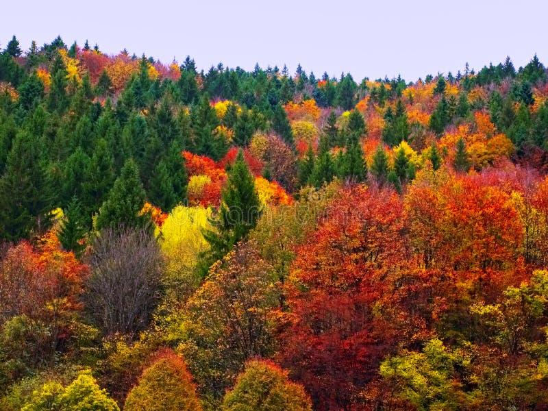 Красочный ландшафт лесных деревьев падения осени стоковые фото